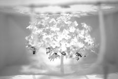 Notice-Forest (Grenzeloos1) Tags: macromondays theme justwhitepaper yukenteruya artist miniature tree cutting goma noticeforest
