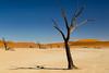 Deadvlei (Cornelia Pithart) Tags: afrika aussenaufnahme bäume deadvlei düne dünen himmel landschaft licht namib namibnaukluftpark namibnaukluftnationalpark namibia natur querformat salztonpfanne sanddünen schatten sossusvlei südlichesafrika tonpfanne wüste africa claypan deadtrees desert dune dunelandscape dunes horizontal horizontalformat landscape light nature outdoor outdoors saltpan sanddunes shade shadow sky southernafrica trees