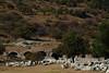 IMG_4410a (goaniwhere) Tags: ephesus ephesusturkey turkey ancientcity historicsite history rubble ruins grandtheatre libraryofcelsus mycenean