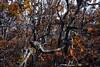 Zavižan (roksoslav) Tags: velebit croatia 2008 zavižan šuma nikon d80 sigma18125mm