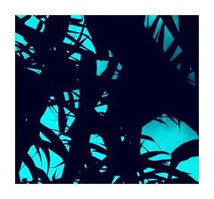 IIII (One-Basic-Of-Art) Tags: nature natur color colour bunt farbe annewoyand woyand 1basicofart onebasicofart quadratisch ecken fotorahmen rahmen muttererde erde pflanze grün vert green weis weiss weiserrahmen