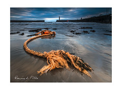 Here Be Dragons (RonnieLMills) Tags: herebedragons dragon rope float flotsam low tide washed up sand dark skies donaghadee harbor harbour lighthouse early morning