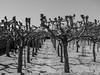 Platanenschatten (filmundfotogrossgerau) Tags: platanen schatten landschaft mathildenhöhe darmstadt bäume herbst planzen natur