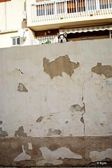 Watchdog (Kym.) Tags: andalucía andalusia day4 dog doggy nerja otherpeoplesgang spain wall watchdog