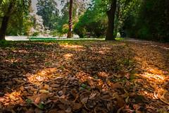 Giardini reali (SDB79) Tags: bosco giardino caserta reggia natura foglie alberi rosso luce sottobosco parco paesaggio