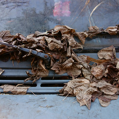 Foglie morte su un vecchio furgone abbandonato. Inverno. Dead leaves on an abandoned old van. Winter ( natura morta) (sandroraffini) Tags: dead leaves abandoned van morte furgone abbandonato winter cuore mente sentimento heart freddo cold solitary end solitario symbol simbolo clichè sony rx100 sandroraffini bologna ghiacciato frozen foglie inverno feeling mind finale grigio grey urban exploration casuale tergicristallo dettagli details naked reality nuda realtà percezione perception random triste final sad metallic organic metallico organico rust ruggine way my his pic