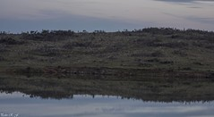 Reflejo (pedroramfra91) Tags: naturaleza nature landscape reflejo reflection