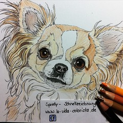 """🎨 drawing of my Speedy-Day: Chihuahua """"Lina"""" She's so cute 😊 #d#art_empire #artgallery #artoftheday #artlovers #dogart #art_spotlight #animalart #animalartists #drawingpen #drawingaday #drawingtime #drawingcontest #drawingdog #dogdrawing #chihua (Clarissa Scheffler) Tags: square squareformat ludwig iphoneography instagramapp uploaded:by=instagram"""