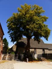 Branches libres (bowb59) Tags: france tree liberty liberté arbre nord avesnois quievelon