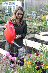 NVG_allotment_May (14)