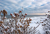 Aputi - Explored (jrobblee) Tags: ice snow rose bush sea ocean beach sky horizon cold winter clouds inuit white red water christmas