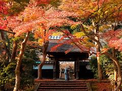 Enkaku-Ji Temple -円覚寺- (chikuma_riv) Tags: japan nature landscape river lake mountain forest flower sunset sunrise spring summer autumn winter leaves