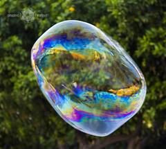 Rosa y Raul _61 (Almu_Martinez_Jiménez) Tags: pompa luz collor habón magic magia globo