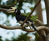 Toucan (Dariusz Laszczyk) Tags: island toucan bird