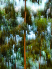 Meandering Through Tall Trees (Steve Taylor (Photography)) Tags: path meander tall palm art digital blue brown green asia singapore tree forest trees trunk blur mist