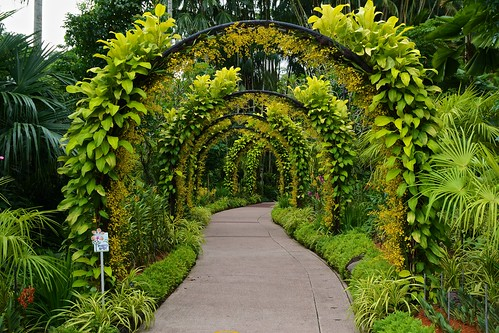 Path in the National Orchid Garden in the Botanical Gardens in Singapore