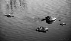 Reflection DSC_0828 (Kerstin Winters) Tags: water rocks reflections ripples black white blackandwhite cmwdblackandwhite cmwd shadows schatten steine wasser reflektionen outdoor lake pond teich see nikon nikondsl nikkor nikondigital d7200 colorado fountaincreek minimal flickr monochrome