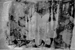 Flower (evaldasslusnys) Tags: lith print darkroom photography analog film flower