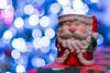 Aún hay magia por ahi?? (Alyaz7) Tags: nikond7200 lentenikonnikkorafs35mm118gdx navidad christmas lucesnavideñas christmaslights efectobokeh santaclaus desenfoque blur magia magic adornosnavideños christmasornaments cute tierno