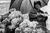 Week10- Portrait: Environmental (lilianguerrero) Tags: dogwood week10 portrait retrato mujer woman bw flowerseller vendedoradeflores