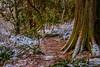 DSCF4800 (rdpe50) Tags: landscape forest trees trunk trail dusk sunset snow watershedpark deltabc