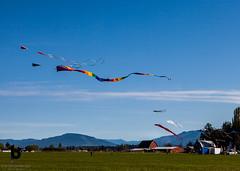Kites (Culinary Fool) Tags: usa kites washington brendajpederson culinaryfool skagitvalley blueskey mountains bard farm 2016 wa 2470mm28 april