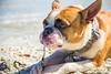 IMG_2026 (megscapturedtreasures) Tags: ammo sun sunset dog beach dogs ruff days daycare