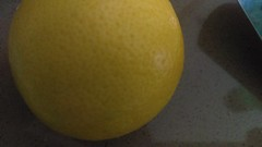 (clascaris) Tags: meyerlemon firstin34years lemon yellow offthetree citrusfruit