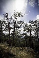 El Bosque (Saúl Martínez // Photojournalist) Tags: california sky nature forest de landscape mexico woods san paisaje sierra pedro ensenada astronomy baja martir astronomía