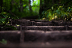(John.Allen9200) Tags: uk trees england plants brown plant tree green nature grass stairs canon outdoors eos stair mud bokeh britain outdoor walk derbyshire united great steps kingdom trail step gb brit nottinghamshire 30d meden