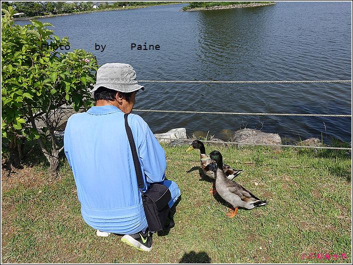 和歌山大池遊園-平池綠地公園 (29).JPG