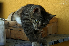 20150628_P1010850 (RudiMag - Describe your pictures please!) Tags: cat kot