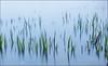 Straws/Long Exposure (Eline Lyng) Tags: leica sea nature landscape leicam240 m240 seascape straws longexposure aposummicron50mmf2 50mm norway larkollen water