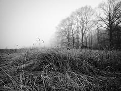 Au ras des herbes (steph20_2) Tags: panasonic gh3 lumix m43 714 monochrome monochrom paysage countryside campagne noir noiretblanc ngc blanc black bw white skanchelli landscape