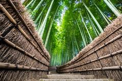 Adashino Nenbutsu-ji (mendhak) Tags: adashinonenbutsuji sel1018 sony1018mmf456 a6300 arashiyama bamboo forest kyoto private 化野念仏寺 嵐山 kyōtoshi kyōtofu japan exif:lens=e1018mmf4oss camera:make=sony geo:city=kyōtoshi exif:make=sony geo:country=japan exif:model=ilce6300 geo:state=kyōtofu exif:aperture=ƒ56 camera:model=ilce6300 geo:lon=135664501 exif:focallength=10mm geo:location=トロッコ嵯峨駅 exif:isospeed=400 geo:lat=350266266 wallpaper mendhakwallpaper