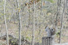 _DSC4317 (purin_cess) Tags: centralpark 2016 autumn 11月 十一月 秋 中央公園 紐約 ny newyork