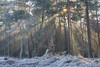 Let there be Light (nldazuu.com) Tags: vorst natuur sunrise winter dawn nevelig nederland winters zijpenberg davezuuring rheden landschap nldazuufotografeertcom zonsopkomst heide herikhuizerveld natuurmonumenten ochtend rijp posbank gelderland koudemorgen