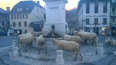 Pause à Laruns chez Lilou et nos brebis qui font une pause fontaine à eau