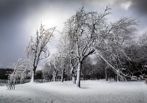winter warped trees