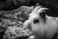 (Russo 86) Tags: rabbit bunny coniglio