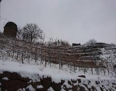 Radebeul - Bismarkturm (Fotos von Helmut) Tags: radebeul bismarkturm weinberge winter schnee