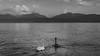 Morges (guicolas) Tags: morges lac nuage cygne