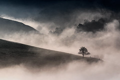 Misty Pennines (Craig Hannah) Tags: mist fog weather tree dovestones chewvalley pennine saddleworth greenfield moorland hills landscape craighannah 2017 january winter clouds cloudinversion westriding yorkshire oldham greatermanchester england uk valley countryside