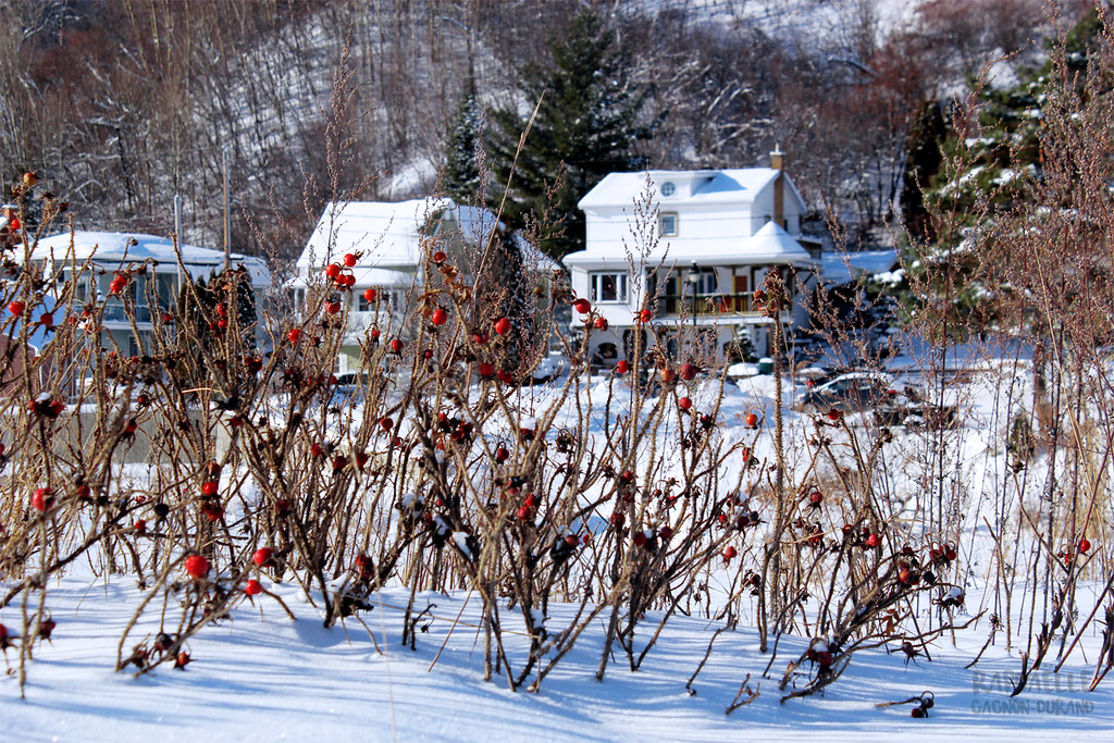The world 39 s best photos of saguenay and winter flickr for A la maison blanche saison 1