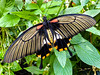 Butterfly Lines (Steve Taylor (Photography)) Tags: insect butterfly lines plant flora foliage leaves hallplace bexley