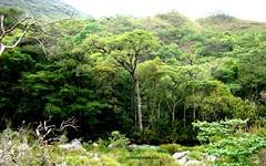 No caminho da Canastra (Sophie Carrière) Tags: verde cerrado árvores