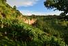 The lower Sipi waterfall (supersky77) Tags: sipi waterfall cascata fall verde green banana plantation piantagione uganda africa elgon mountelgon