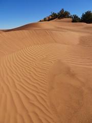 Rides sur les dunes (Des Goûts et des Couleurs) Tags: maroc sahara morocco desert mhamid orange bleu blue ciel dune dunes liberté calme silence isolement dromadaires caravanes bédouins aventure