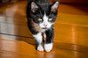 Stalker (cowgirljo78) Tags: black stalker halloween sunlight indoor monster watchyourfeet little fluffy fuzzy furry kitty