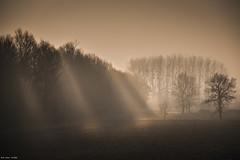 Photo 21 (ultimumpicture) Tags: maineetloire arbres champs matin projet365 rayons silhouette soleil corné lumière